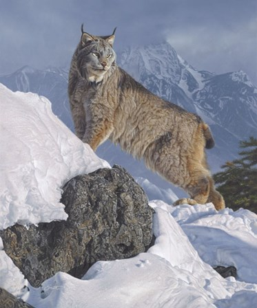 Austere Ascent (Lynx) by Daniel Smith art print