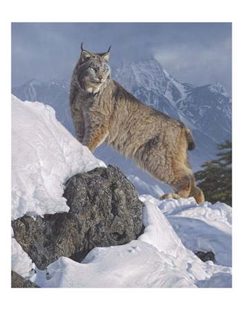 Austere Ascent (Lynx) by Daniel Smith art print
