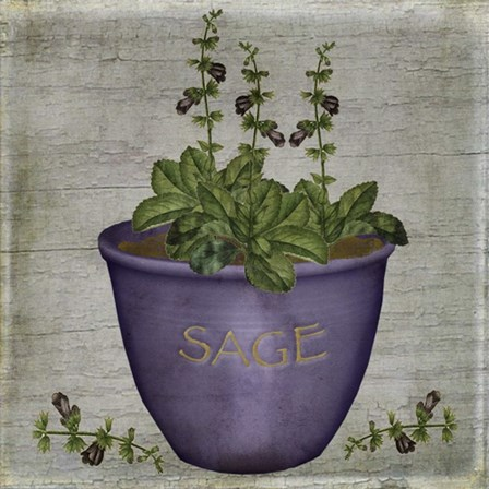 Herb Sage by Beth Albert art print