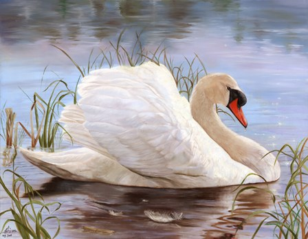 Swan by Shiva art print