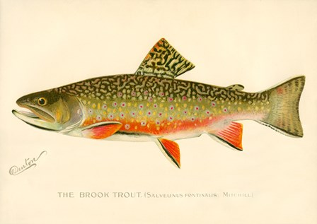 The Brook Trout by Print Collection art print
