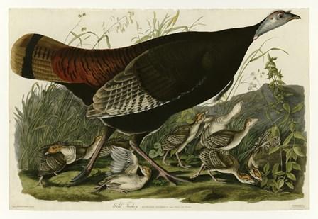 Wild Turkey by Vintage Apple Collection art print