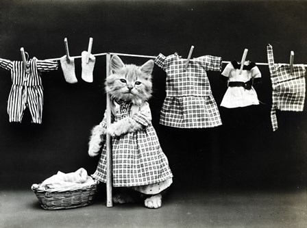 Kitty Laundry by Vintage Apple Collection art print
