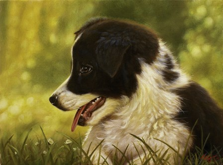 Border Collie Pup 2 by John Silver art print
