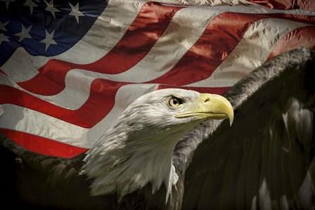 American Eagle by Jai Johnson art print
