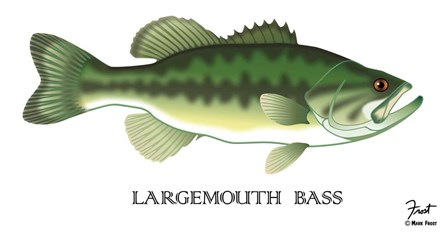 Largemouth Bass by Mark Frost art print