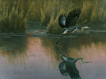 Evening Flight - Great Blue Heron by Wilhelm J. Goebel art print