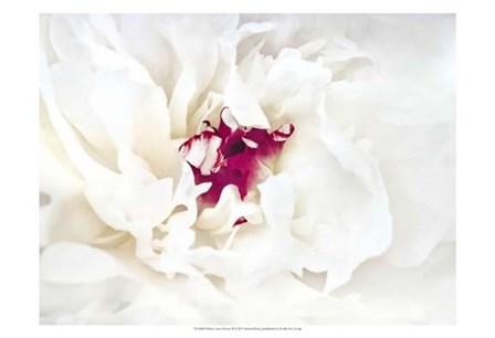 White Linen Peony II by Rachel Perry art print