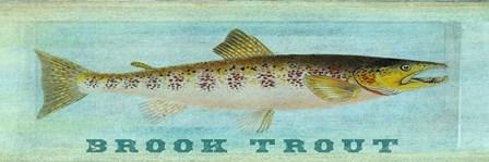 Brook Trout by Tina Carlson art print