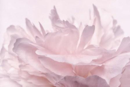 Pink Peony Petals III by Cora Niele art print
