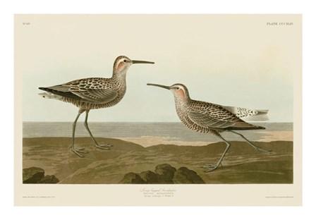 Long-Legged Sandpiper by John James Audubon art print