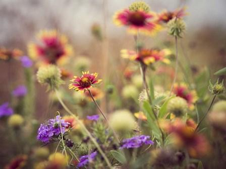 Wild Blooms I by Sonja Quintero art print