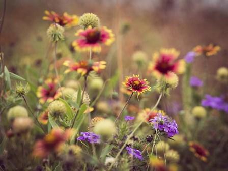 Wild Blooms IV by Sonja Quintero art print