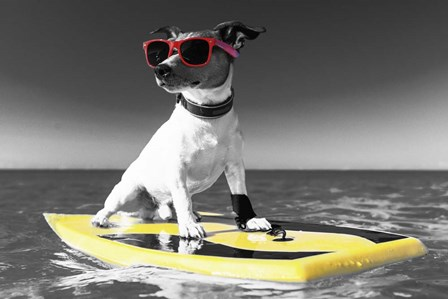 Pop of Color Surf's Up Dog by Color Me Happy art print