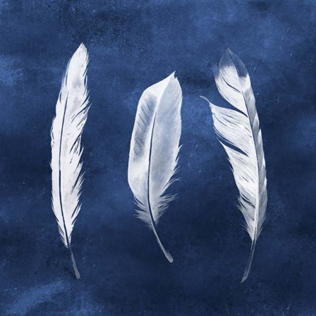 Cyanotype Feathers II by Grace Popp art print