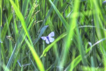 Splendor In The Grass by Robert Goldwitz art print