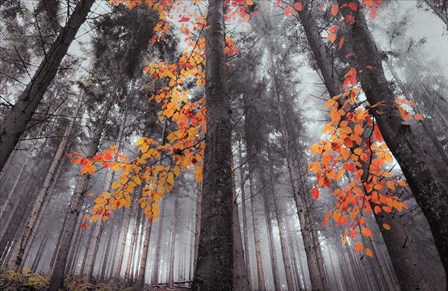 Autumn Colors by Marc Apers art print