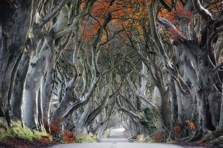 The Dark Hedges by Trevor Cole art print