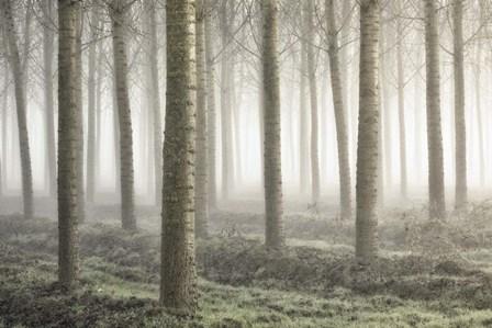 Small Woodland by Fiorenzo Carozzi art print