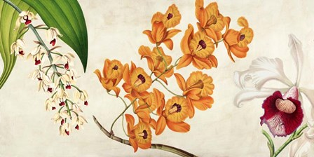 Panneau Botanique II by Remy Dellal art print