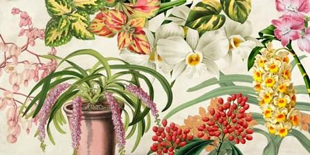Panneau Botanique IV by Remy Dellal art print