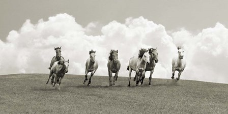 Herd of Wild Horses (BW) by Pangea Images art print