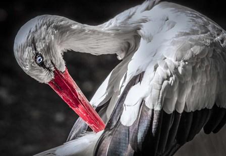 The Stork III by Duncan art print