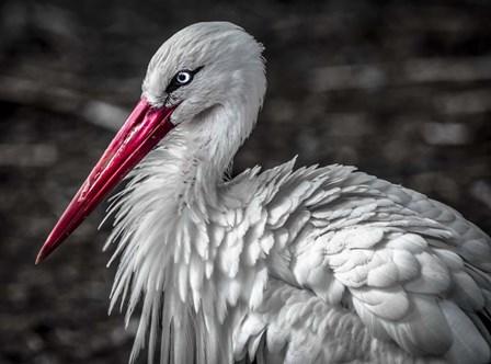 The Stork V by Duncan art print