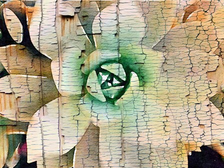 Succulent on Wood by Irena Orlov art print